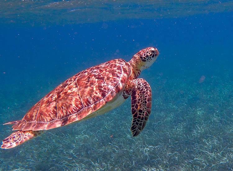 żółw wodny morski Belize ciekawostki atrakcje Ameryka Środkowa