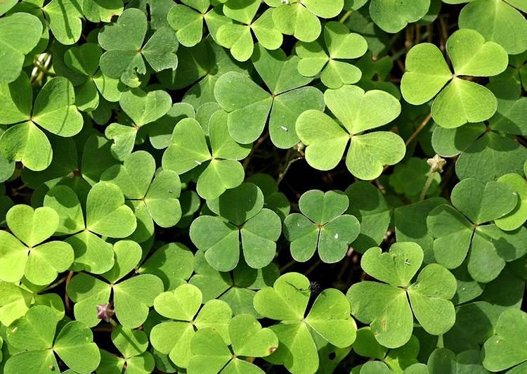 Dzień świętego Patryka ciekawostki Irlandia