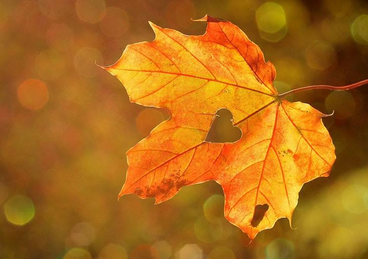 jesień ciekawostki pory roku