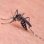 komar ukąszenie odstraszanie ciekawostki komary