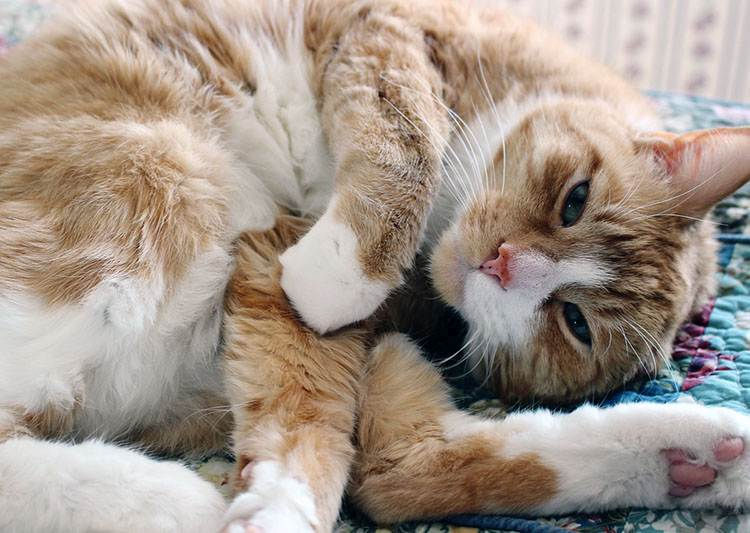 koty kot ciekawostki o kotach cytaty aforyzmy przysłowia