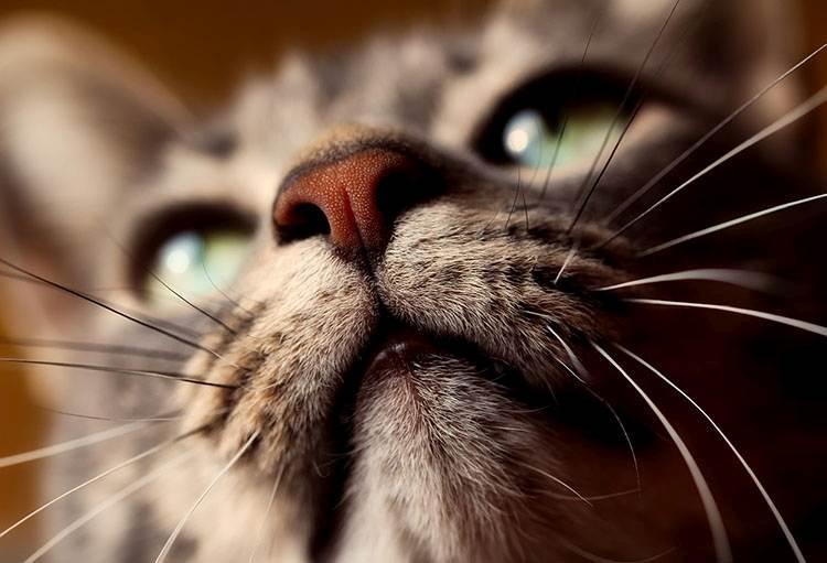 kot ciekawostki koty wąsy kota zmysły
