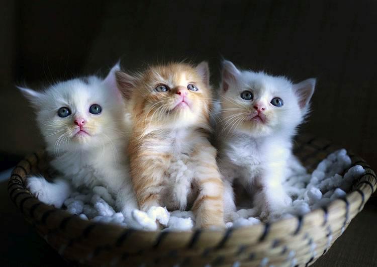 kot ciekawostki koty charakter kota małe kotki kocięta