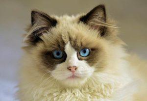 kot przysłowia sentencje powiedzenia powiedzonka oczy kota spojrzenie