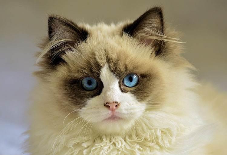 koty kot ciekawostki o kotach