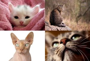 koty ciekawostki o kotach kot