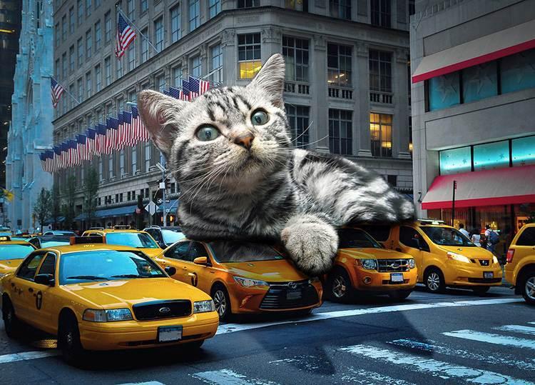 taxi dowcipy o taksówkarzach humor taksówkarze kawały