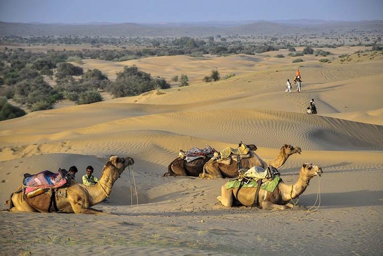 wielbłądy pustynia Indie ciekawostki atrakcje kultura zabytki