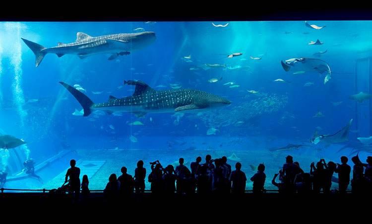 akwarium rekin ciekawostki rekiny