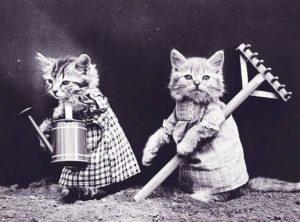 dowcipy o kotach kot humor koty kawały