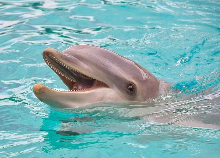delfin ciekawostki historia Francji królowie