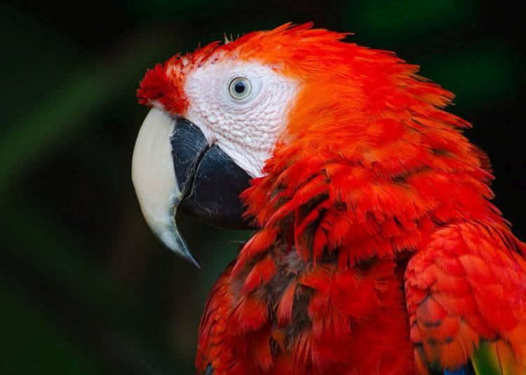 ara papuga ciekawostki o papugach papugi