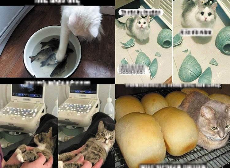 koty memy o kotach mem kot humor śmieszne obrazki
