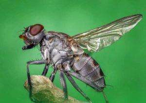 przysłowia mucha ciekawostki o muchach muchy