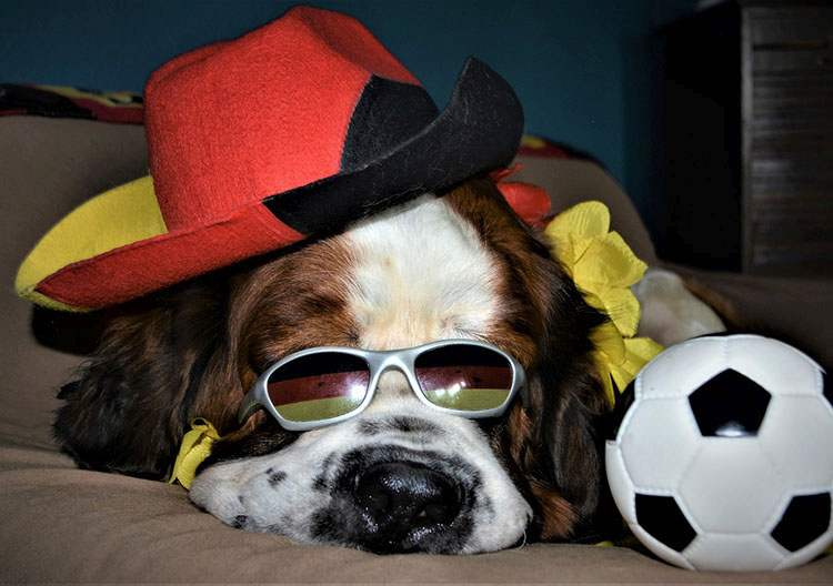 pies dowcipy o psach kawały psy humor żarty