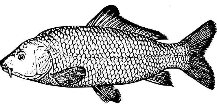 przysłowia wędkarskie-powiedzonka wędkarze ryby o wędkarzach