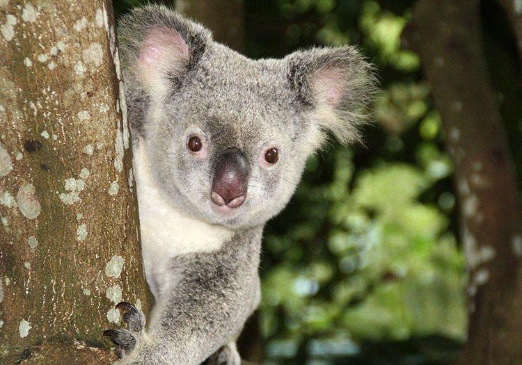 Australia humor dowcipy o Australii kawały