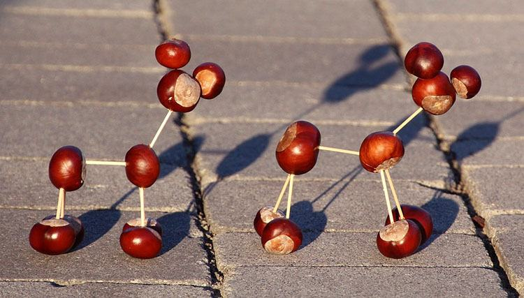 kasztan ciekawostki o kasztanach kasztany informacje kasztanowe ludki jesień