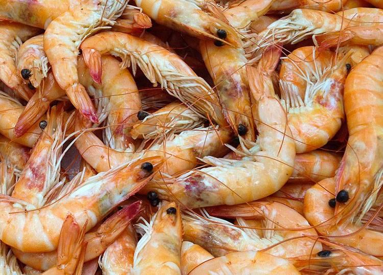 krewetki owoce morza ciekawostki o krewetkach krewetka