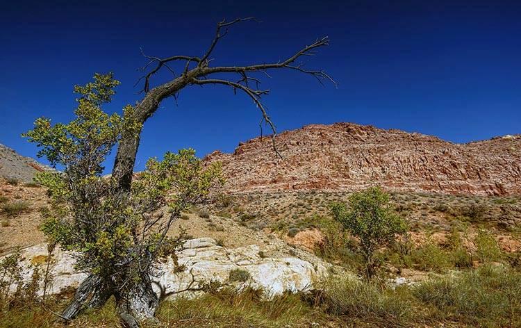 pustynia stan Nevada ciekawostki USA atrakcje