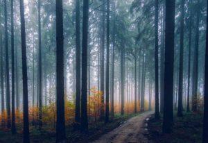 drzewa ciekawostki o drzewach