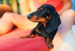 jamniki dowcipy o jamnikach kawał pies jamnik żarty humor psy