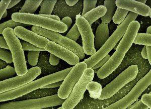 bakteria ciekawostki o bakteriach bakterie
