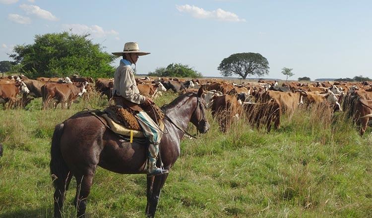gaucho bydło Argentyna ciekawostki atrakcje podróże
