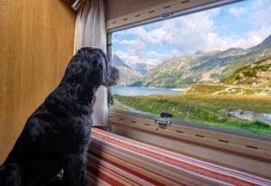pies zwierzę na wakacjach wakacje z psem