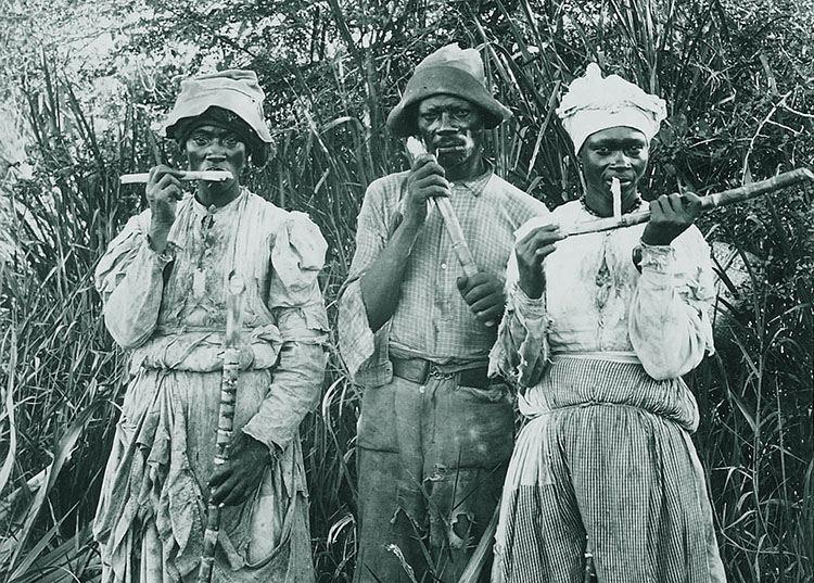 niewolnicy trzcina cukrowa plantacja Jamajka ciekawostki atrakcje wyspa państwo zdjęcia