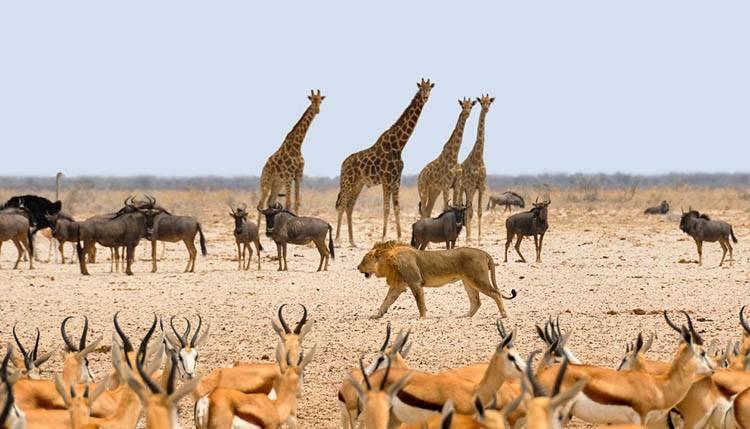 zwierzęta safari Namibia ciekawostki atrakcje Afryka
