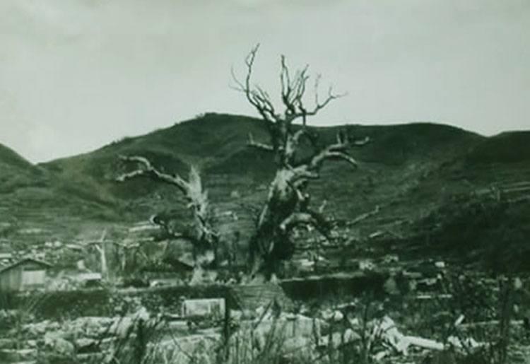 drzewa bomba wybuch miasto Nagasaki ciekawostki miasto Japonia Kiusiu