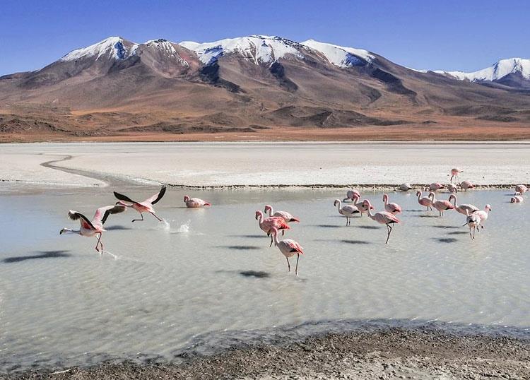 Salar de Yuni flamingi Boliwia ciekawostki atrakcje