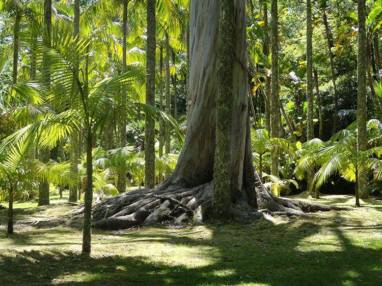 ogród Terra Nostra Furnas atrakcje ciekawostki