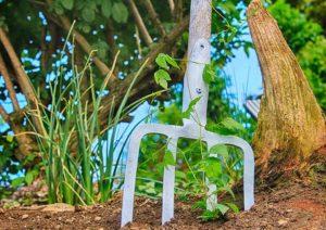 ogród rośliny cieniolubne