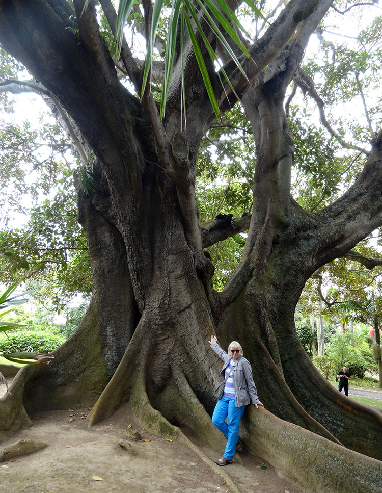 park jardim Borges Ponta Delgada ciekawostki Sao Miguel Azory atrakcje