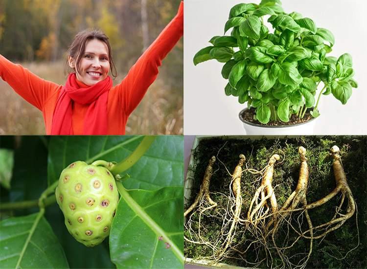 szczęście hormony szczęścia rośliny