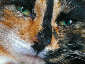 Kocia wyspa ciekawostki Tashirojima Japonia koty