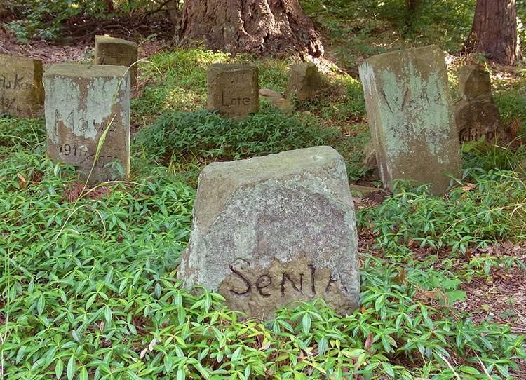 cmentarze dla zwierząt ciekawostki cmentarz