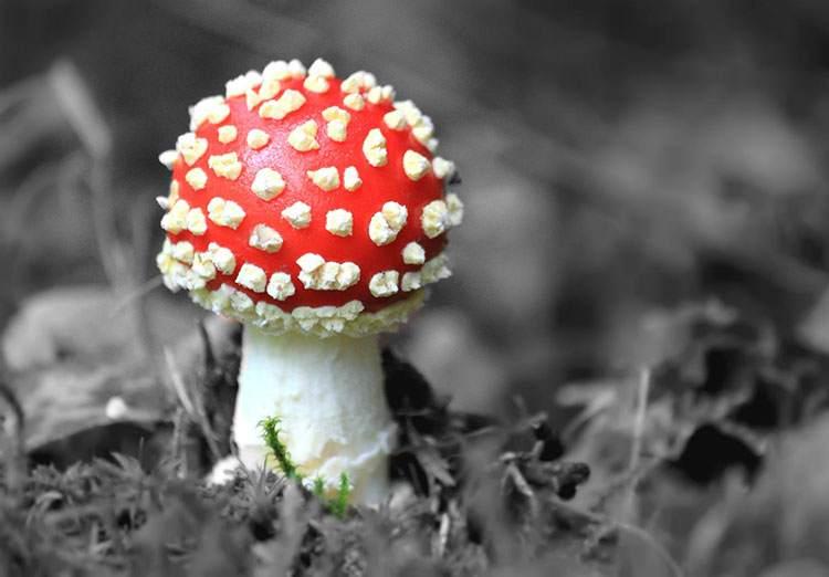 grzyb dowcip grzyby dowcipy humor muchomory kawały grzybiarze