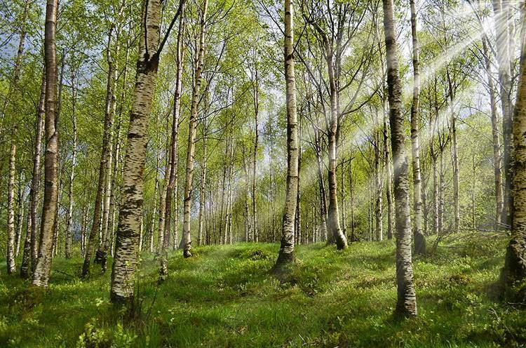 las park kleszcz ciekawostki borelioza kleszcze choroby