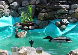 oczko wodne ogród działka jak zrobić poradnik