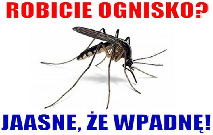 komar memy komary śmieszne obrazki humor