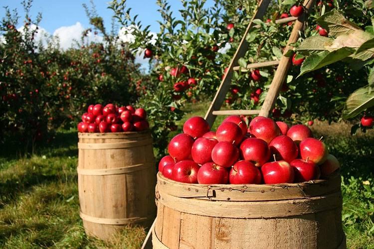 sad sadownictwo ciekawostki sady plantacje