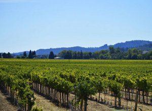 winnica wino kalifornijskie ciekawostki winnica Kalifornia