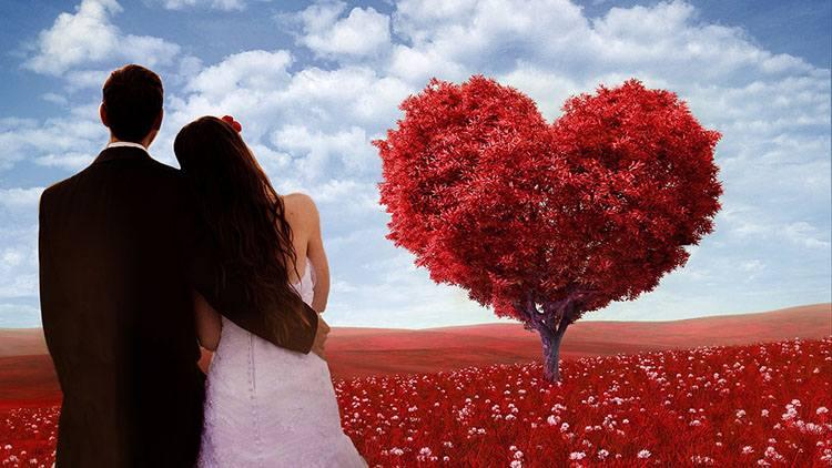 serce ciekawostki o sercu