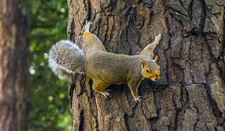 wiewiórka ciekawostki wiewiórki