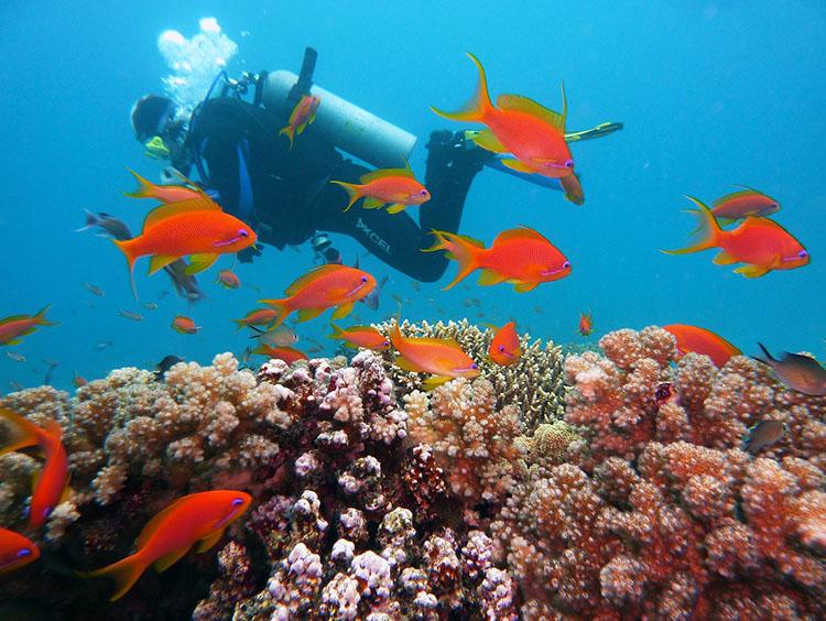 nurkowanie rafa koralowa Egipt ciekawostki atrakcje zabytki informacje wakacje