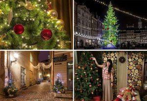 Praga Czechy ciekawostki choinka Bożego Narodzenie choinki Wigilia