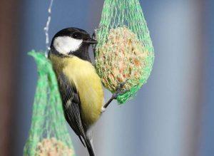 dokarmianie ptaków zima ptaki zimą